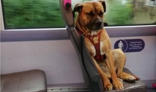 Dog on the bus