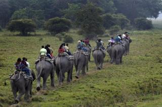 in_pictures Tourists on an elephant safari at Pobitora Wildlife Sanctuary in the Morigaon district of Assam, India