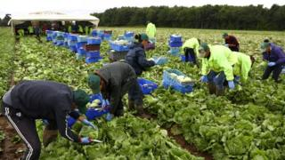 Migrant workers in Kent