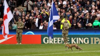 Fox on pitch during 6 nations rugby match.