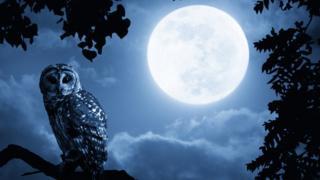 Una luna llena