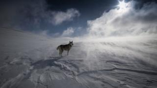 Dog in Southern Cairngorms