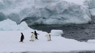 Four penguins on a large white ice berg. Choppy waters and another large iceberg in the background.