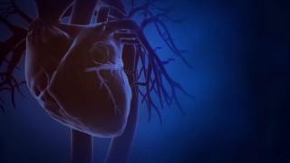 Animacija, srce