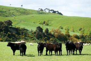 Akibat emisi gas metana dari industri besar peternakan domba dan sapi, juga karena peningkatan industri energi, Selandia Baru merupakan satu di antara negara penghasil karbon terbesar per kapita