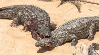 Un survivant d'une attaque de crocodile est retenu à l'hôpital pour des factures impayées