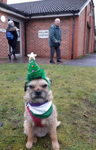 Heidi the border terrier outside a Manchester polling station