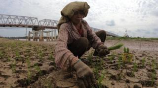 petani di batanghari