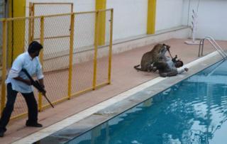 Леопард ранил шестерых человек в школе в Бангалоре