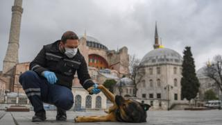 Istanbul city employee caring for stray dog 2020