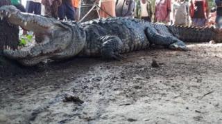 Le barrage de Mpomopa, situé dans le sud du Zimbabwe, est infesté de crocodiles (photo d'archives).