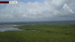 મેંગ્રોવ કેન્યા