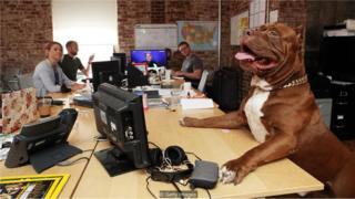 Cachorro no escritório