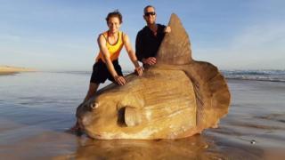 渔民发现了这只大鱼
