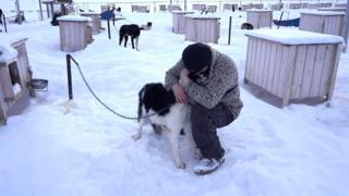 Homem com cães