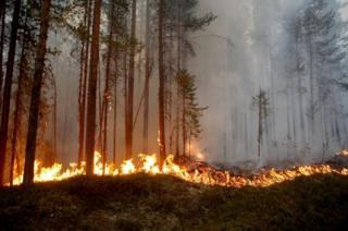 Wildfire in Karbole, Sweden, 15 July 2018