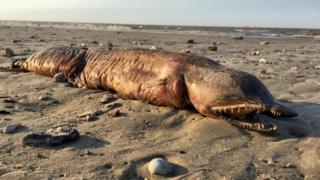 Imagem da criatura na praia