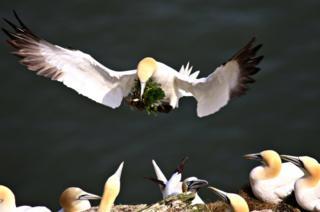 Bird flying above other birds