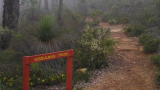 A section of the Bibbulmun Track in The Darling Range in Western Australia