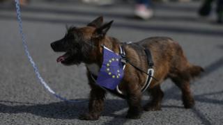 Dog wearing EU flag