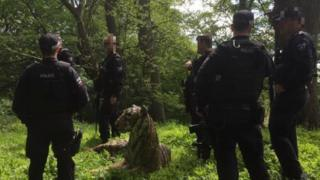 Tiger and armed police in the wood