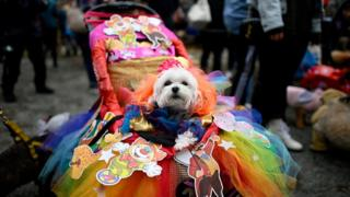 dog in a rainbow costume