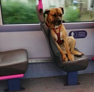Bradford bus dog set for new home after viral photo