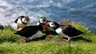 """""""We took a day trip to Lunga at the Treshnish Isles near Mull. There were puffins aplenty,"""" says Janet MacLeod from Oban."""