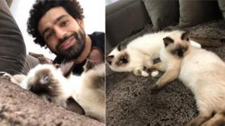 Мо Салах с двумя сиамскими котами