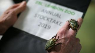 Flower beetles are counted during the annual stocktake at ZSL London Zoo in central London
