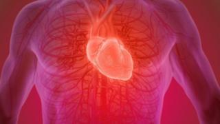 Corazón humano.