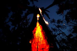 A burning tree is seen during a fire in an area of the Amazon rainforest