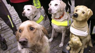 Guide dogs- generic