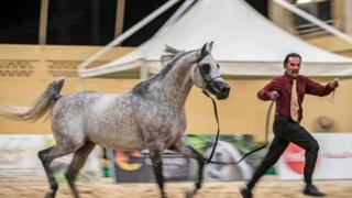 Man parades a horse on Saturday 5 October 2019