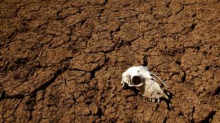 "The skull of an unidentified animal is seen in Alarcon""s reservoir on April 1, 2008 in Cuenca during a drought period in Spain."
