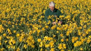 ما سبب ارتفاع أسعار الزهور؟