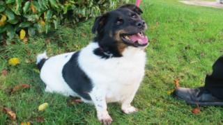 Overweight Dog Sheds Six Stone - BBC News