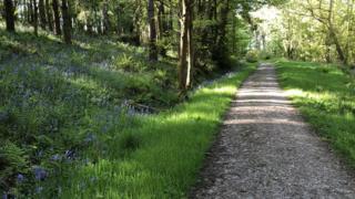 Eastridge Woods