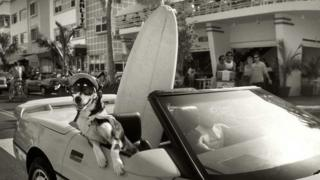 A dog in sunglasses hangs out the side of a car