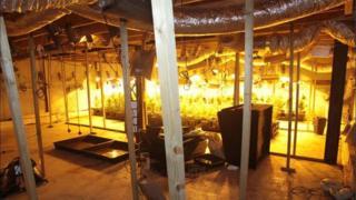 Secret cannabis factory