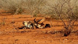 Animal corpses in Marsabit, Kenya