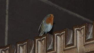 Robin in Liverpool Cathedral