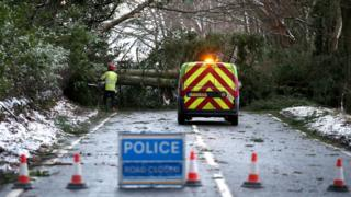 Fallen tree at Yetts O'Muckhart, Clackmannanshire