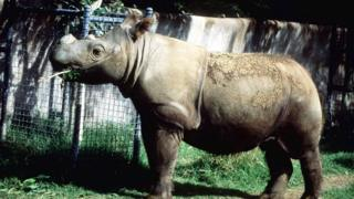 rhino-eating-at-a-zoo