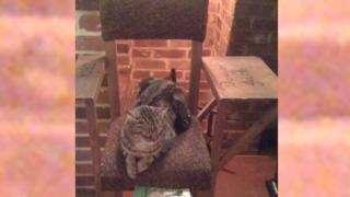 Cat on Jack Wild's chair