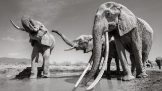 Three elephants at a water hole
