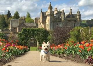 Casper the Wee White Dug looking happy on a glorious day at Abbotsford House, the borders home of Sir Walter Scott near Melrose. Alex Grant from Edinburgh took the picture.
