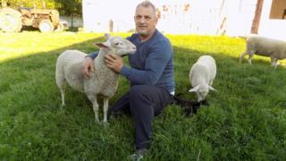 источно фризијска овца сајбер пастир