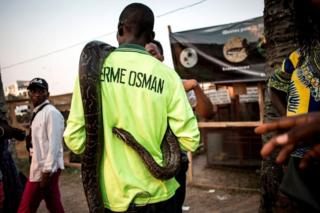 A snake keeper is seen showing off a python at an agriculture fair on September 25, 2018 in Kinshasa, in the Democratic Republic of the Congo.