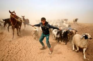 A displaced Iraqi boy leads his animals to safety after escaping from Islamic State controlled village of Abu Jarboa during clashes with IS militants near Mosul, Iraq